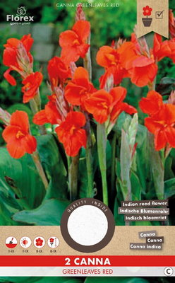 Canna bloembollen, Greenleaves Red Bloemriet (voorjaar)