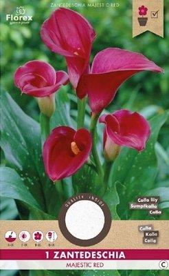 Calla bloembollen, Zantedeschia Majestic Red (voorjaar)
