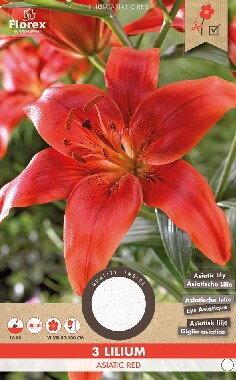 Lelie bloembollen, Lilium Asiatic Red (voor-, en najaar)