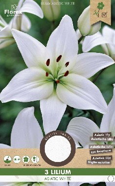 Lelie bloembollen, Lilium Asiatic White (voor- en najaar)