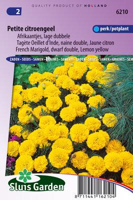 Afrikaantje Zaden, Petite Citroengeel lage dubbele (Tagetes patula nana)