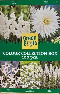 Bloembollen Mix, Witte soorten (Voorjaar)