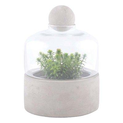 Kweekfles terrarium, Beton schaal (Esschert Design)