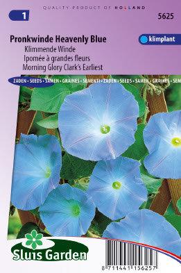 Pronkwinde zaden, Heavenly Blue (Morning Glory)