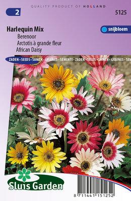 Berenoor zaden, Harlequin Mix (Arctotis)