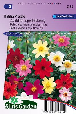 Dahlia Zaden, Piccolo Mix