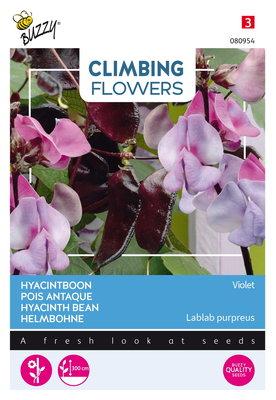 Hyacintboon Zaden, Lablab purpreus