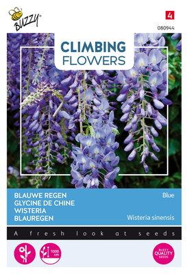 Blauwe Regen Zaden, Wisteria sinensis