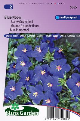 Guichelheil zaden, Anagallis Blue Noon