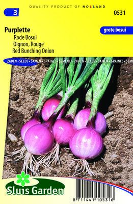 Ui Zaden, Rode Bosui Purplette (Uien)