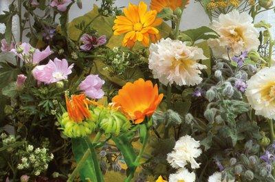 Bloemen en Kruiden Zaden, Eetbaar mengsel
