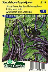 Bonen zaden kopen, Purple Queen, Paarse boon   Moestuinland