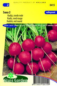 Radijs zaden kopen, Saxa 2 | Moestuinland
