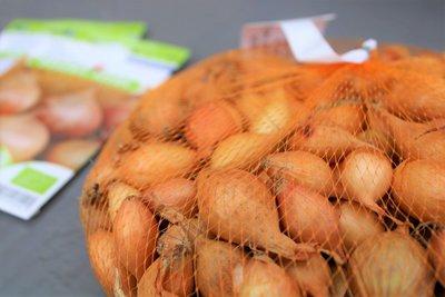 Plantuien kopen, Sturon (500 gram) | Moestuinland