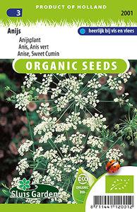 Biologische Anijs zaden kopen, Anijsplant | Moestuinland