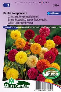 Dahlia zaden kopen, Pompon mix hoge | Moestuinland