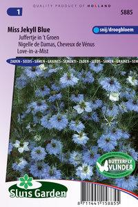Juffertje in het groen zaden kopen, Jekyll Blue Miss | Moestuinland