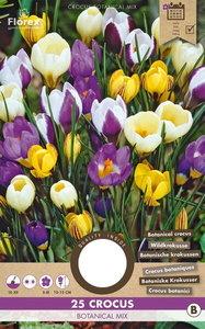 Krokus bloembollen kopen, Botanisch gemengd (Najaar) | Moestuinland