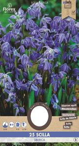 Sterhyacint bloembollen kopen, boshyacint scilla siberica (Najaar) | Moestuinland