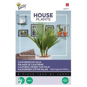 Californische palm zaden kopen, Washingtonia filifera | Moestuinland
