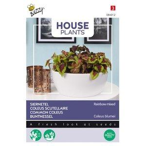 Siernetel zaden kopen, Coleus blumei (rainbow mix) | Moestuinland