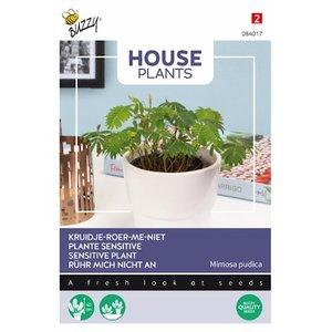 Kruidje-roer-me-niet zaden kopen, Mimosa pudica | Moestuinland