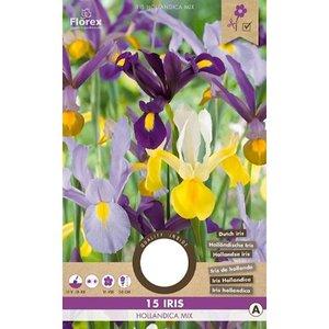 Hollandse Iris bloembollen kopen, Hollandica Mix (15 stuks najaar) | Moestuinland