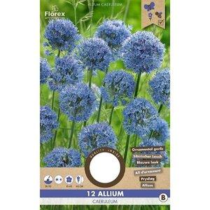 blauwe alliumbollen kopen - Moestuinland