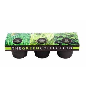 Groene Kruiden Collectie kopen, Set van 3 potten (Bieslook, Basilicum, Peterselie) | Moestuinland