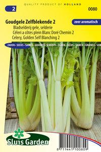 Goudgele zelfblekende bladselderij zaden kopen | Moestuinland