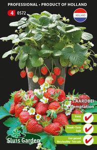 aardbei zaden kopen bij moestuinland