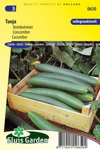 komkommer zaden kopen voor tanjakomkommer bij moestuinland