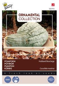 Pompoen zaden kopen, Blue Hubbard Large | Moestuinland
