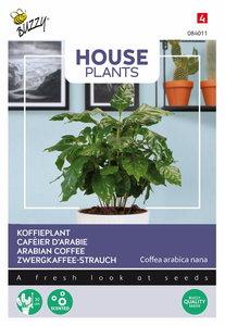 Koffieplant zaden kopen, Coffea Arabica nana | Moestuinland