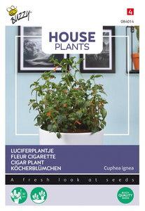 Luciferplantje zaden kopen, Sigarenplant/Sigarenbloem Cuphea ignea | Moestuinland
