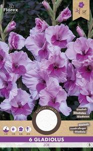 Gladiool bloembollen, Alannah Lila Zoe (voorjaar)