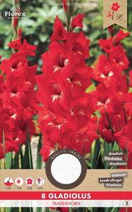 Rode gladiool bloembollen kopen, Gladiolen Traderhorn rood (voorjaar)   Moestuinland