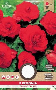 Grandiflora red begonia rood, bloembollen kopen | Moestuinland