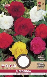 Begonia bloembollen kopen, Dubbel Grandiflora mix | Moestuinland