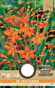 Crocosmia bloembollen kopen, Montbretia Orange oranje   Moestuinland