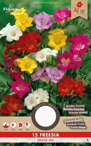 Freesia bloembollen kopen, Single Early Mix vroege enkel | Moestuinland