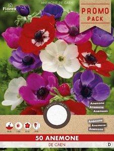 Anemoon bloembollen, De Caen - Grootverpakking (voor- en najaar)