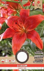 Aziatische lelie bloembollen kopen, Asiatic red lillium | Moestuinland