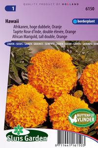 afrikaantje zaden, hawaii oranje kopen bij moestuinland