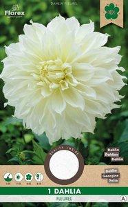 Witte Dahlia bloembol kopen, Fleurel Dinnerplate | Moestuinland