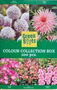 Bloembollen Mix, Roze soorten (Voorjaar)