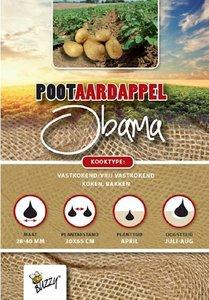 obama pootaardappel kopen voor je moestuin bij moestuinland