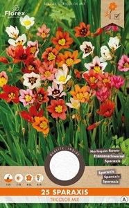 ZIgeunerbloem harlekijnbloem bloembollen, Sparaxis Tricolor Mix | Moestuinland
