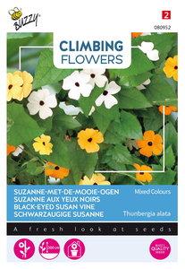 Suzanne-met-de-mooie-ogen zaden kopen, Thunbergia alata | Moestuinland