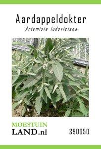 Aardappeldokter zaden kopen, Zilverwitte Alsem (Artemisia ludovicana) | Moestuinland